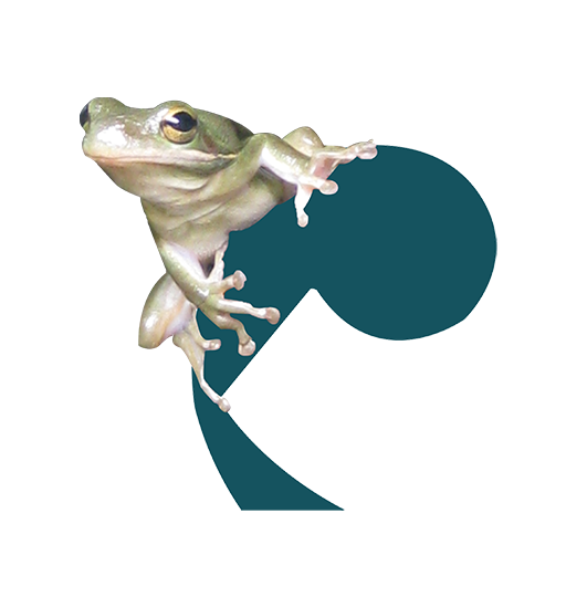 Logo Frog on a Cello Webdesign